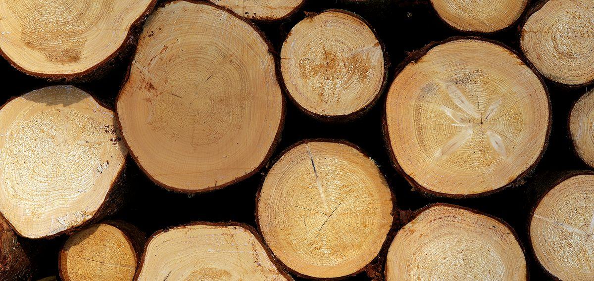 Bayerische Staatsforsten Holzverkauf